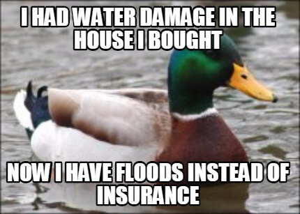 An illustration of a funny duck showing he has house floods instead of home insurance